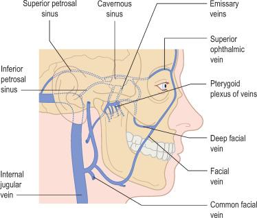 cavenous sinus
