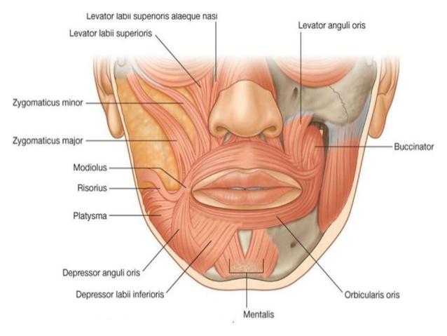 depressor anguli oris myomodulation